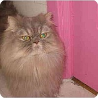 Adopt A Pet :: Esther - Beverly Hills, CA