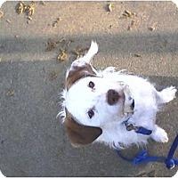 Adopt A Pet :: Frasier - Rancho Cordova, CA