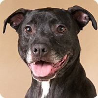 Adopt A Pet :: Max - Chicago, IL
