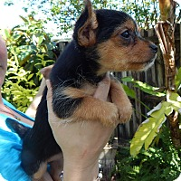 Adopt A Pet :: Roscoe - Miami, FL