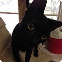 Adopt A Pet :: Streeter - Arlington/Ft Worth, TX