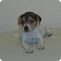 Adopt A Pet :: Lydia - Gary, IN