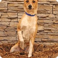Adopt A Pet :: Kane - Waldorf, MD