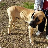 Adopt A Pet :: Gentle Ben - Adoption Pending - Edmond, OK
