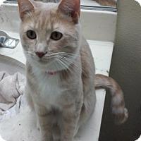 Adopt A Pet :: Aurora - Yorba Linda, CA