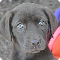 Adopt A Pet :: Kennedy - Atlanta, GA