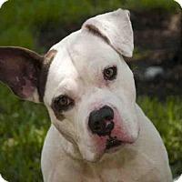 Adopt A Pet :: RONALD - West Palm Beach, FL