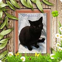 Adopt A Pet :: Genassi - Harrisburg, NC