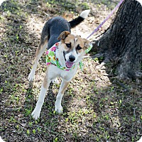 Adopt A Pet :: Addison - Muldrow, OK