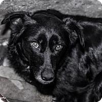 Adopt A Pet :: Lili - Brooklyn, NY
