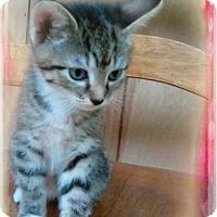 Adopt A Pet :: Harmony - Shippenville, PA