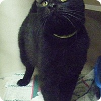 Adopt A Pet :: Saki - Hamburg, NY