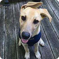 Adopt A Pet :: Ziggy - West Hartford, CT