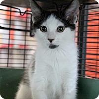 Adopt A Pet :: Corbin - Sarasota, FL
