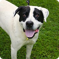 Adopt A Pet :: Chestie - Chester Springs, PA
