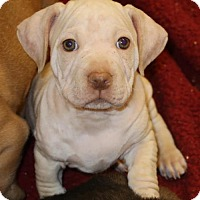 Adopt A Pet :: Albert - Little Compton, RI