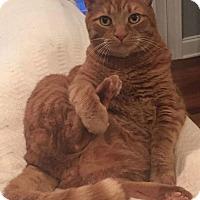 Adopt A Pet :: Rusty - Tega Cay, SC