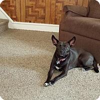 Adopt A Pet :: Mama Cinnamon - Phoenxville, PA