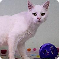 Adopt A Pet :: Chekhov - Murphysboro, IL