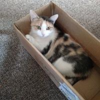 Adopt A Pet :: Ava - Covington, PA