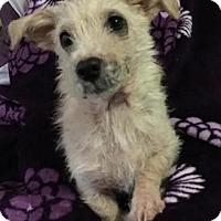 Adopt A Pet :: Noel - Oakley, CA