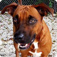 Adopt A Pet :: Kiki - Key Largo, FL