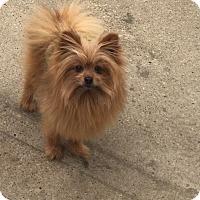 Adopt A Pet :: Tyrone - Edmonton, AB
