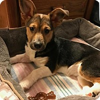 Adopt A Pet :: Gizzy - Woodbridge, VA