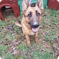 Adopt A Pet :: Sassy - Louisville, KY