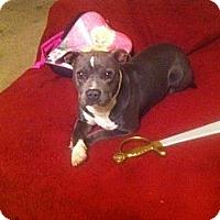 Adopt A Pet :: Molly, sweet as honey - Sacramento, CA
