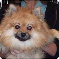 Adopt A Pet :: Augie - Chesapeake, VA