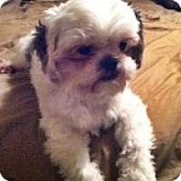 Adopt A Pet :: Gadget - Toronto, ON