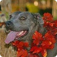 Adopt A Pet :: Mara - Seattle, WA