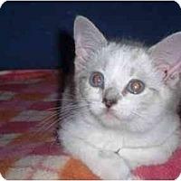 Adopt A Pet :: Winnie - Irvine, CA