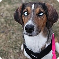 Adopt A Pet :: Becca - Richmond, VA