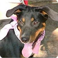 Adopt A Pet :: DeeDee - Glastonbury, CT