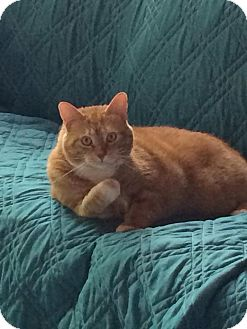 Cat Rescue Middletown Ohio