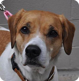 Bailey | Adopted Dog | Atlanta, GA | St. Bernard/Hound ... Selkirk Rex Atlanta