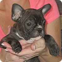 Adopt A Pet :: Wilson - Greenville, RI