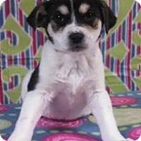 Adopt A Pet :: Leslie - Hamburg, PA