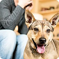 Adopt A Pet :: Izzy - Youngstown, OH