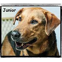Adopt A Pet :: Junior - Warren, PA