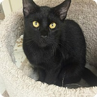 Adopt A Pet :: Panther - East Meadow, NY