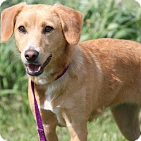 Adopt A Pet :: Ilana - Livonia, MI
