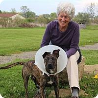 Adopt A Pet :: Colt - Elyria, OH