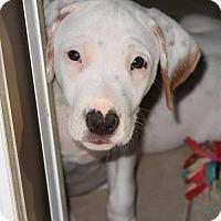 Adopt A Pet :: Gibbs - Little Compton, RI