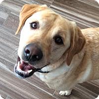 Adopt A Pet :: Vera - Denton, TX