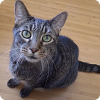 Adopt A Pet :: Big Boy - Quail Valley, CA