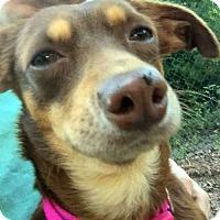 Adopt A Pet :: Juanita - Sudbury, MA