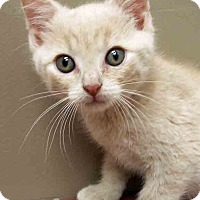 Adopt A Pet :: Rory - Shorewood, IL